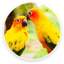 Animal Eye Specialty Center Bird Care