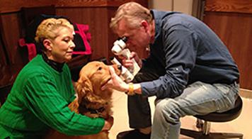 Animal Eye Specialty Center Canine Eye Exam