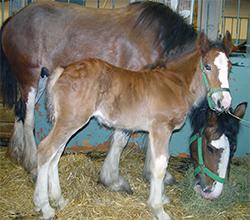 Animal Eye Specialty Center Equine Info